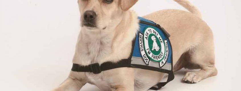 Los perros pueden detectar la diabetes