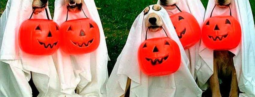 Halloween: Ideas para disfrrazar a nuestra mascota