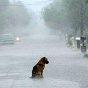 Abandono mascotas